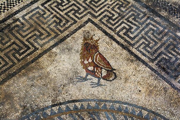 Représentation d'une chouette dans l'angle du décor central du pavement mosaïqué du Ier siècle avant notre ère découvert à Uzès ( Gard), 2017.